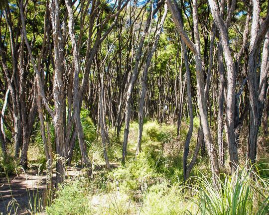 New Zealand Manuka & Kanuka in the flora and fauna of the Abel Tasman National Park