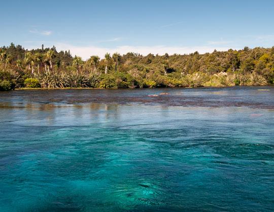 Pupu Springs - Golden Bay