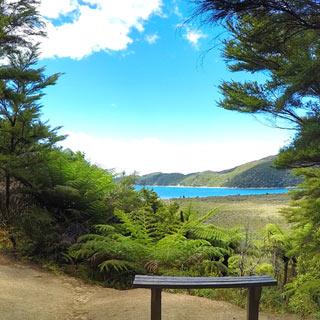 Flora and fauna of the Abel Tasman National Park